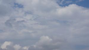 birds-in-sky